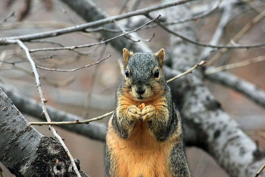 squirrel-image-for-cig-take-regular-breaks-post