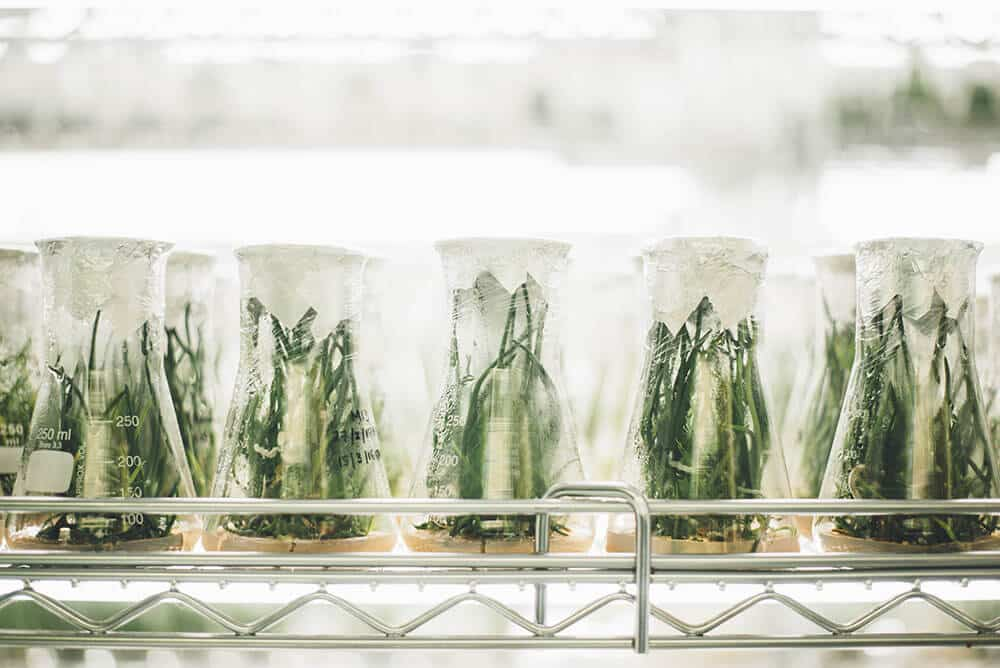 Plants growing in a research lab